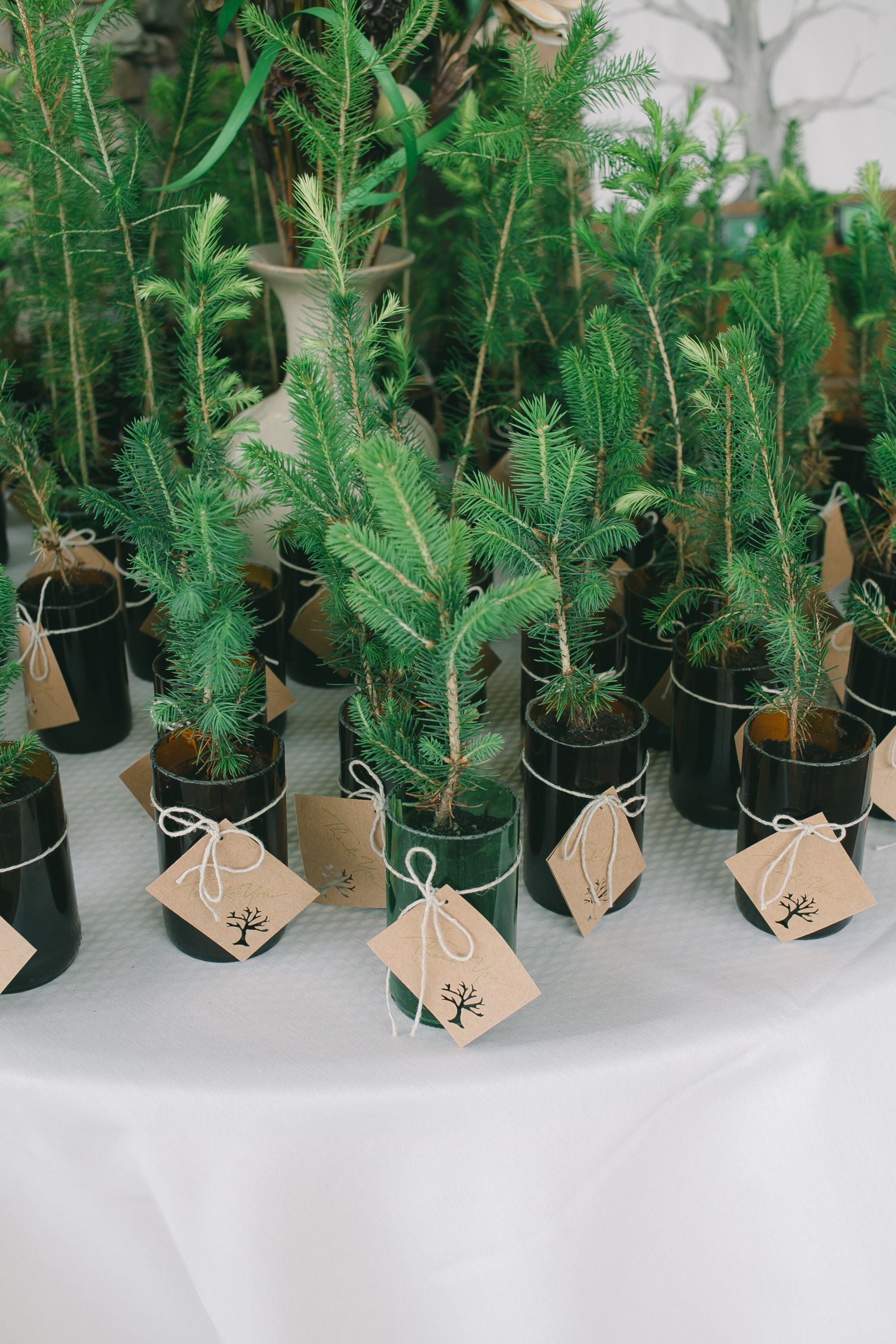Tree Themed Wedding | Wedding Favors | Pinterest | Favours, Couples ...