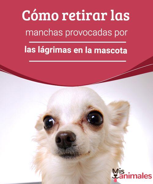 150 Ideas De Perrito Perros Mascotas Perros Mascotas