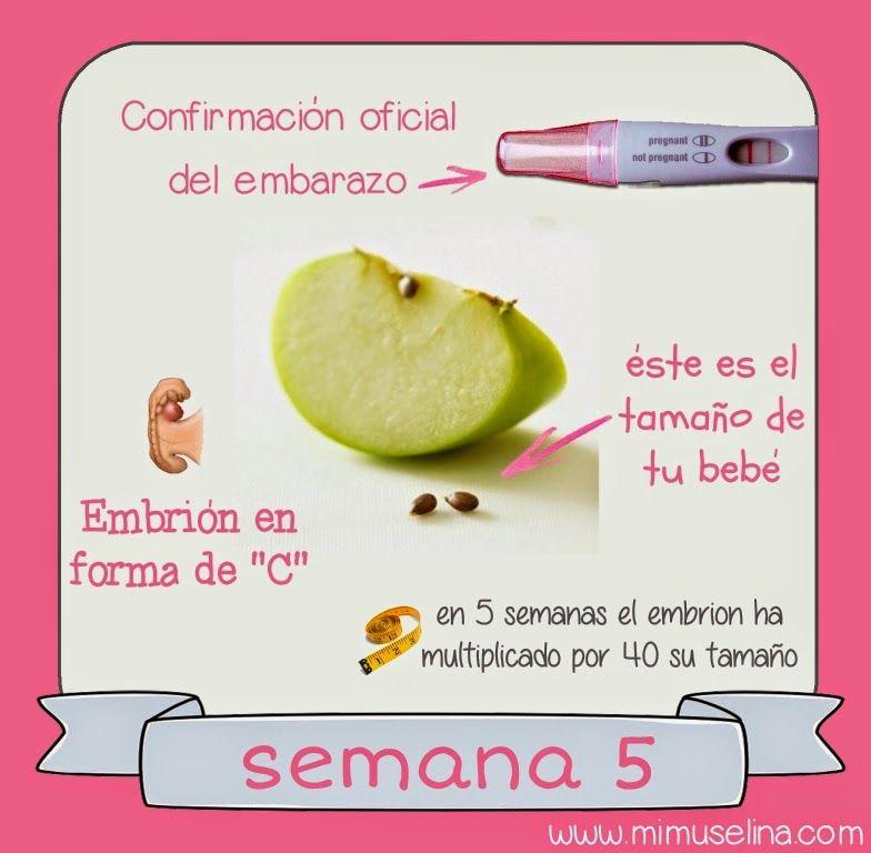 como se ve un bebe de 4 semanas en el vientre