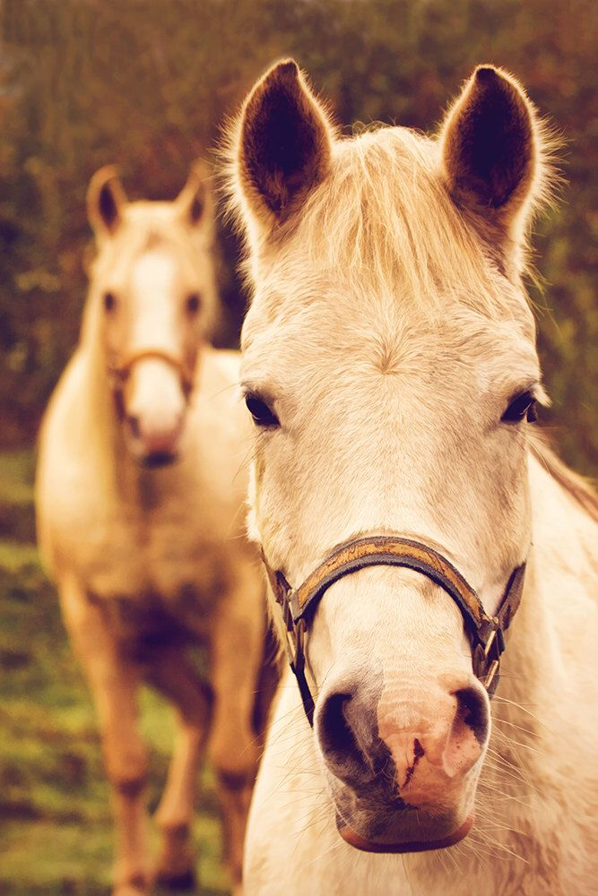 Horse Print, Gift for Horse Lover, Horse Wall Art, Horse Decor ...