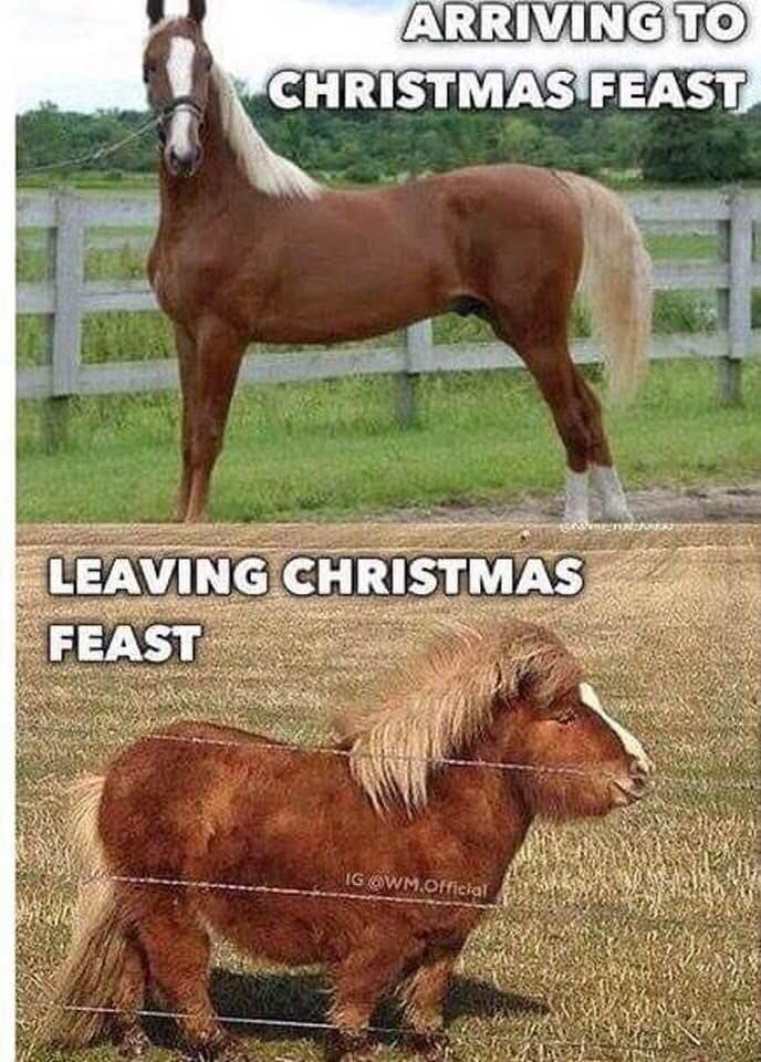 Pin By Norman On Funny Sayings Funny Animal Jokes Funny Animal Memes Funny Horse Pictures