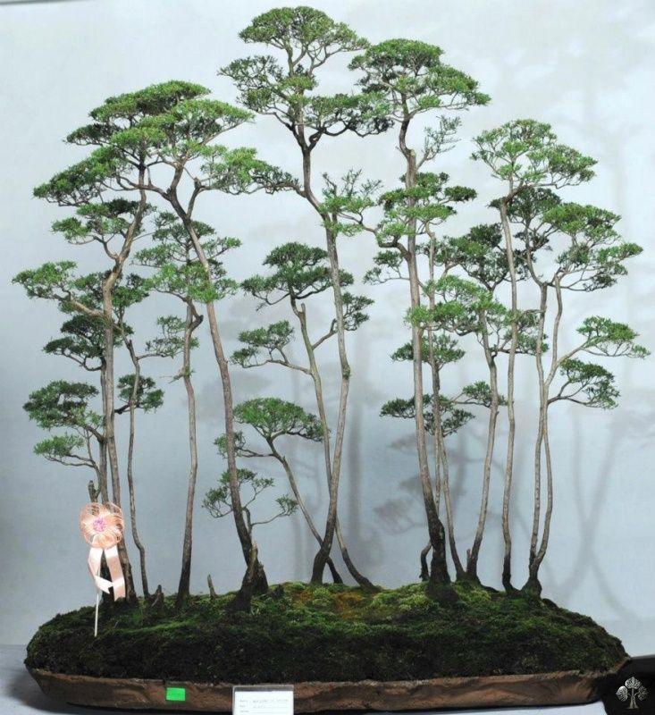 Top 10 Most Popular Bonsai Of The Day Images Bonsai Empire Bonsai Forest Bonsai Tree Bonsai Styles