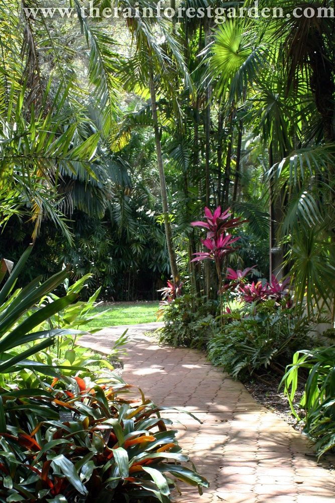 Pink Ti Plants The Rainforest Garden