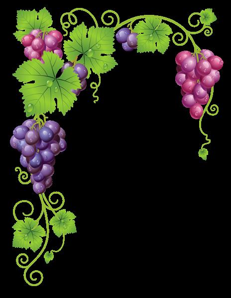 Transparent Vine Decor Png Clipart Picture Grape Painting Clip Art Borders Grapes