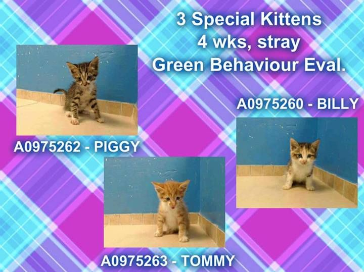 (35) First Alerts: Kittens