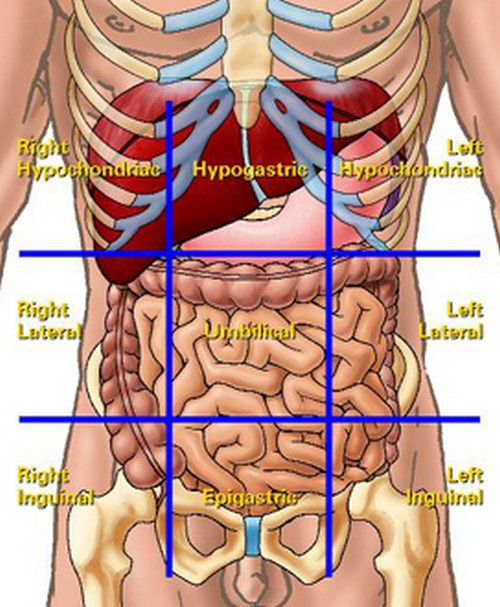 liver location in abdomen quadrants | junior high science | pinterest, Human Body