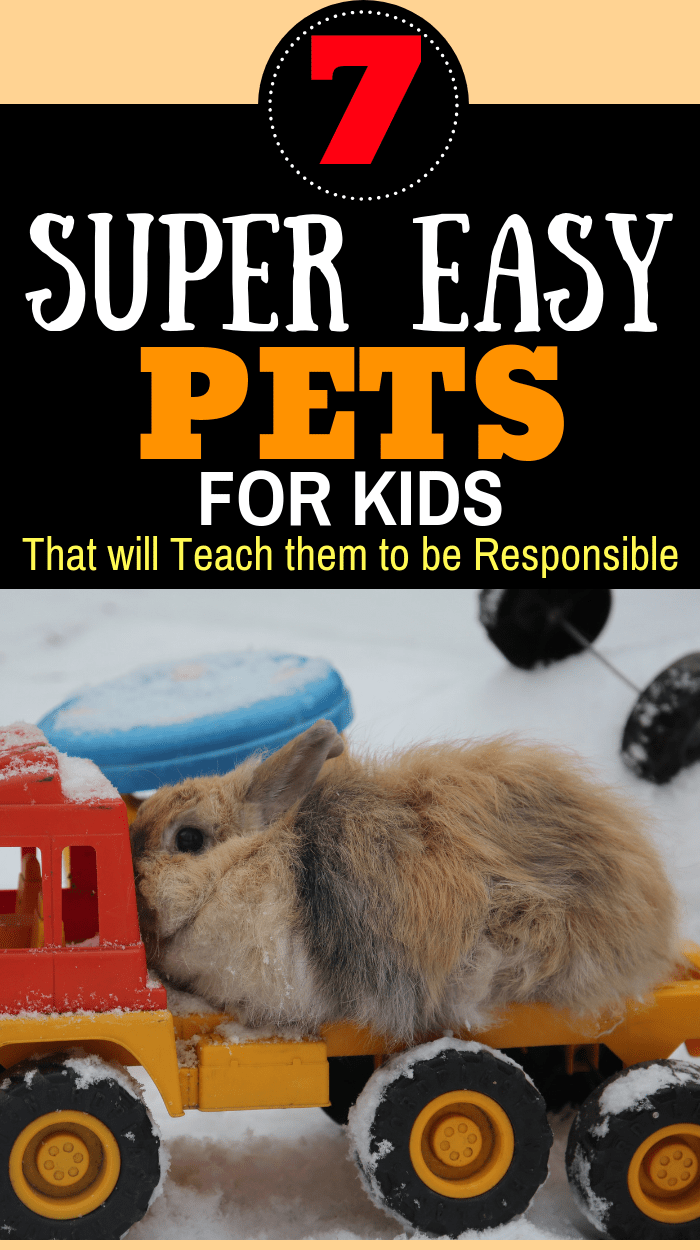 7 Low Maintenance Pets For Kids That Teach Responsibility The Frugal Mom Guide Low Maintenance Pets Animals For Kids Best Pets For Kids