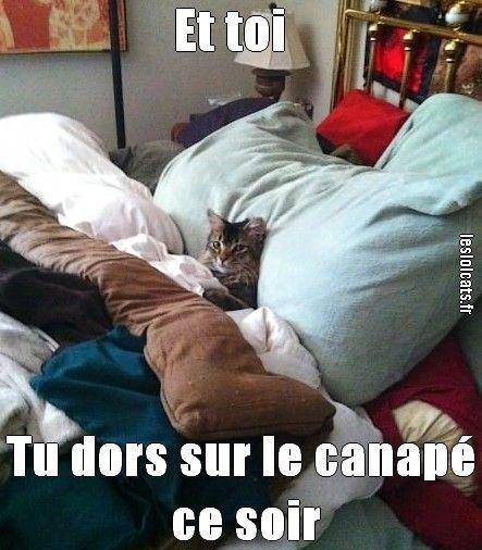 Et toi tu dors sur le canap ce soir humour france for Canape quotes