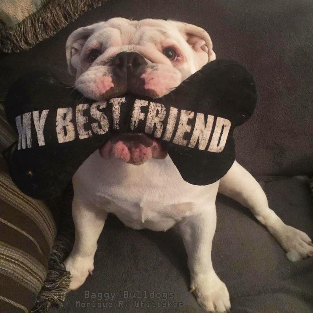 Pin Von Ich Auf Bullys Bulldogge