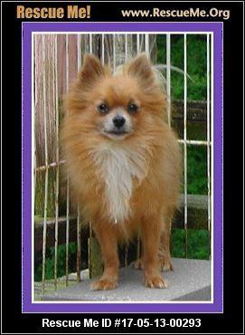 ― Missouri Dog Rescue ― ADOPTIONS ―RescueMe.Org