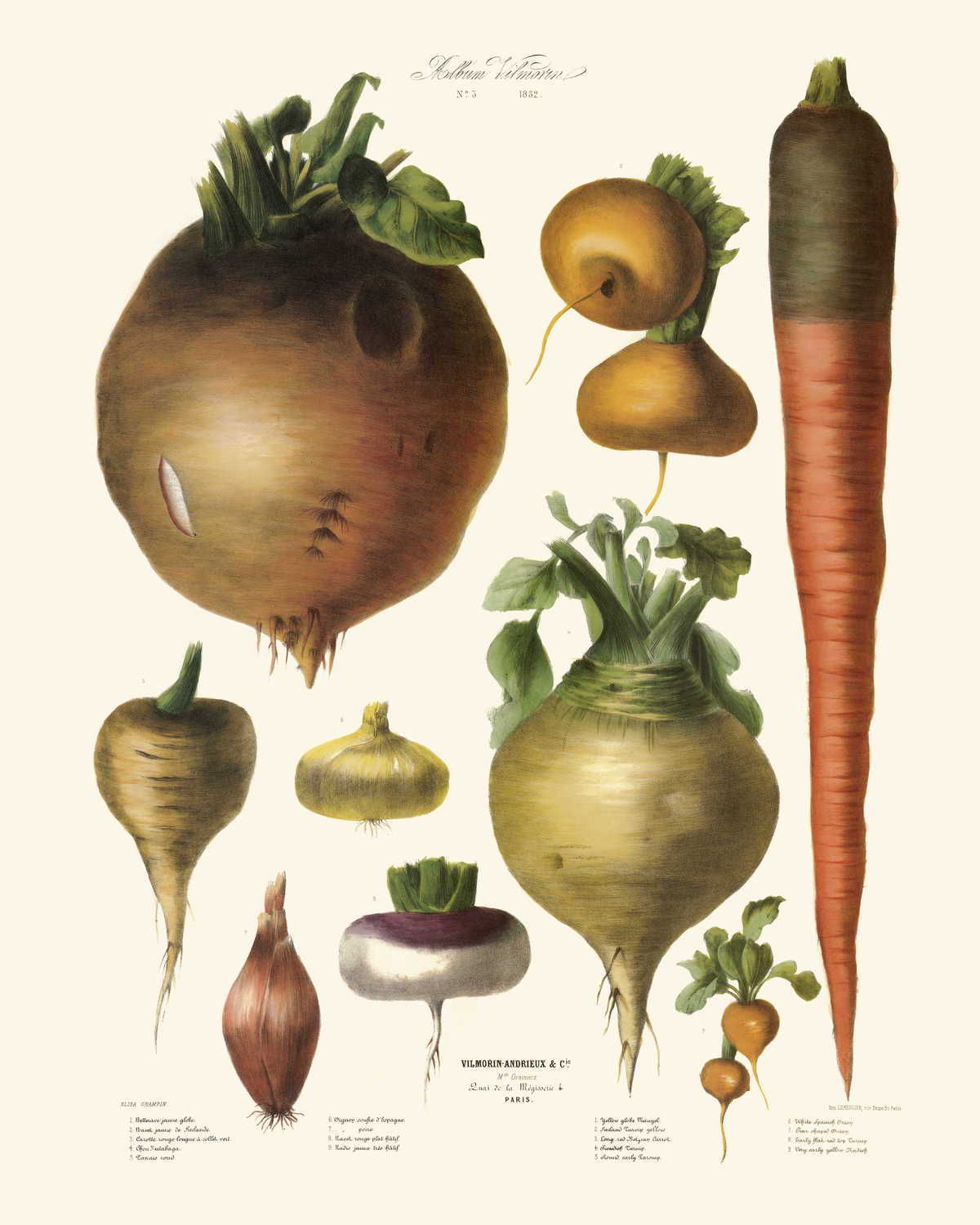 Vegetables Illustration Vintage Print 10 Vegetables Poster Etsy Vegetable Illustration Botanical Drawings Botanical Prints