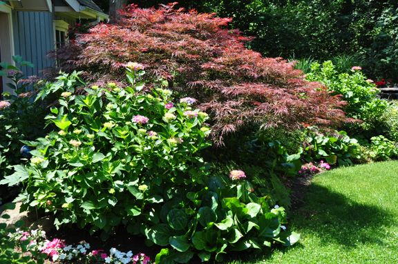 A Pretty Combination Of 160 Several Hydrangea Shrubs 160 And