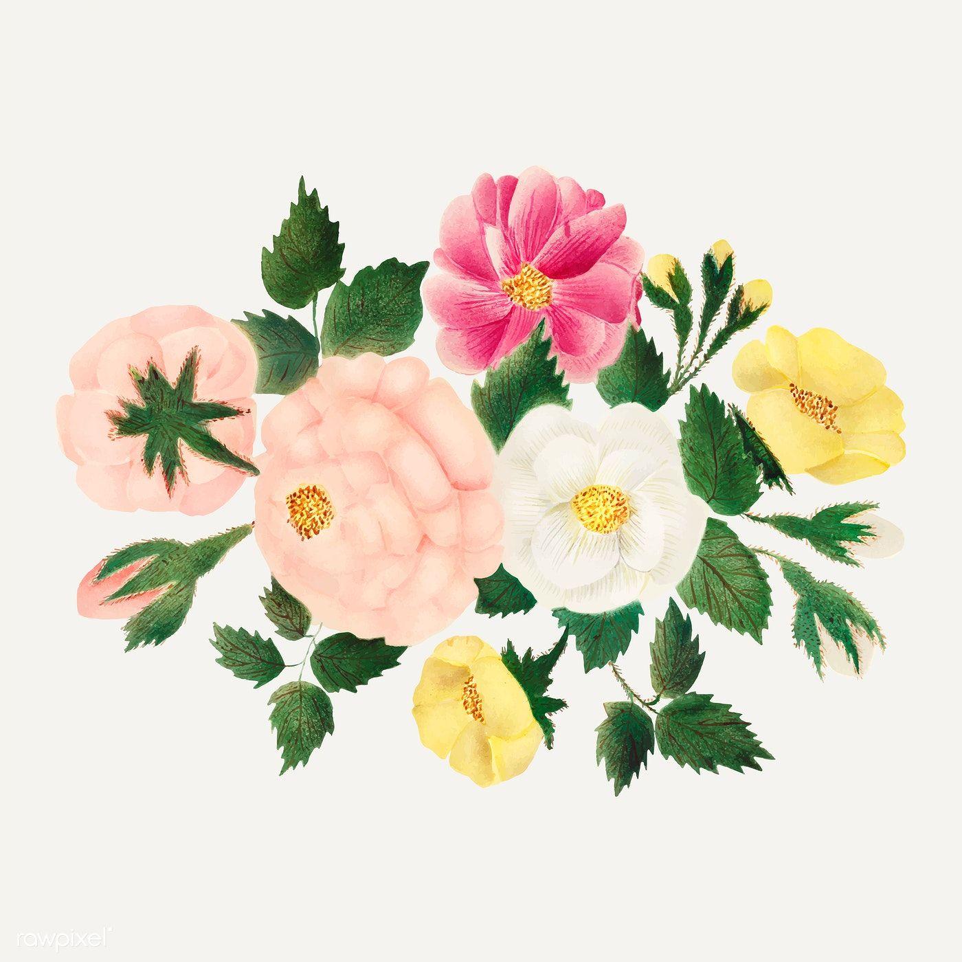 June roses vintage illustration vector premium image by