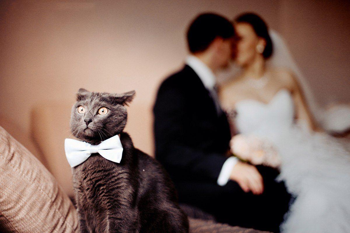 чувство картинки с кошками о свадьбе узоры