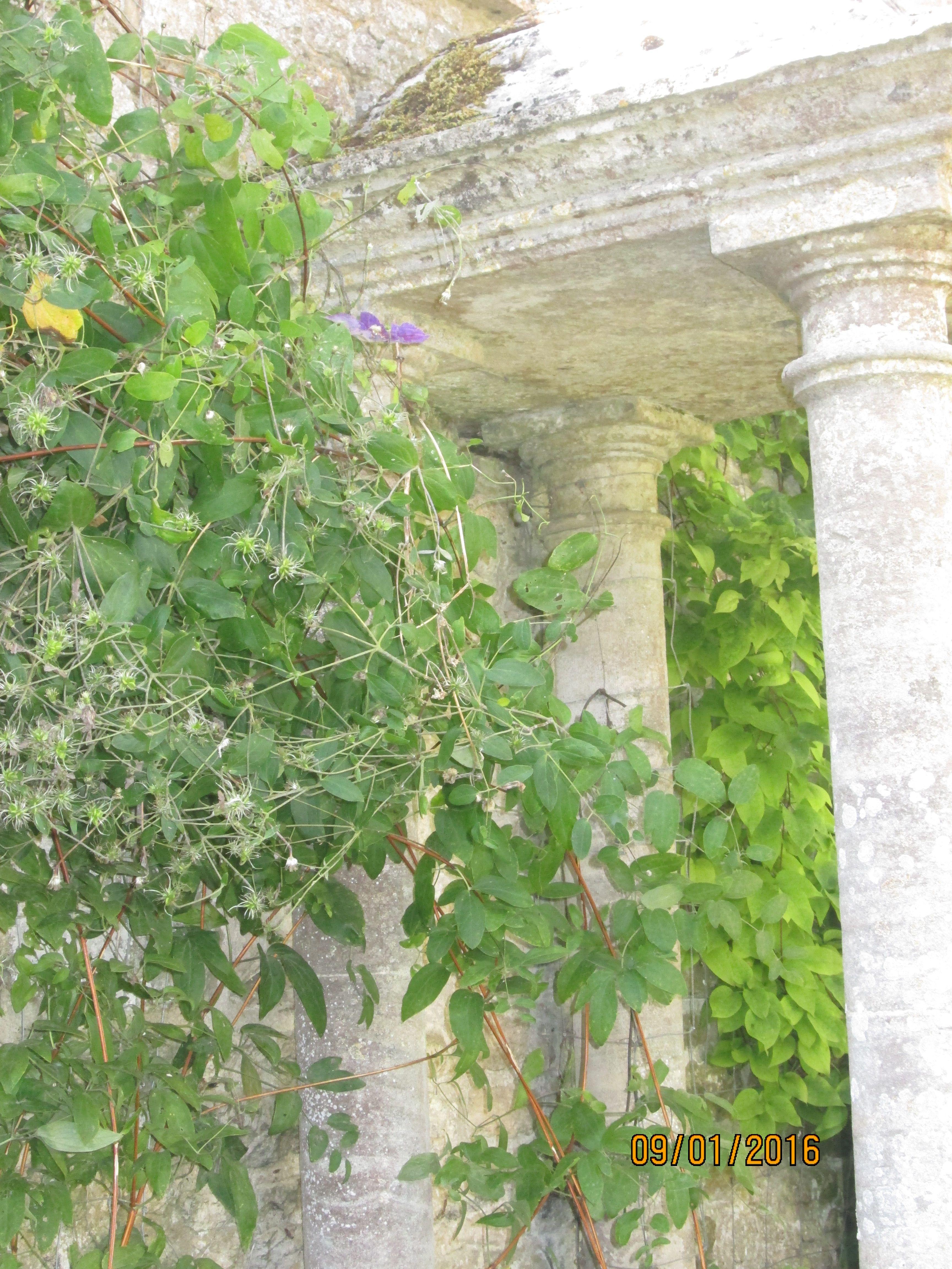 Château de Brécy (14) Puits XVI°s. Jardin d'herbes