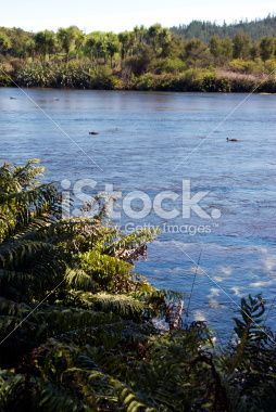 Lush Growth and Spring Water, New Zealand Royalty Free Stock Photo