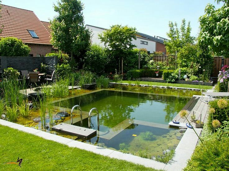 Pin By Mark O On Backyard Pool Swimming Pond Natural Swimming Ponds
