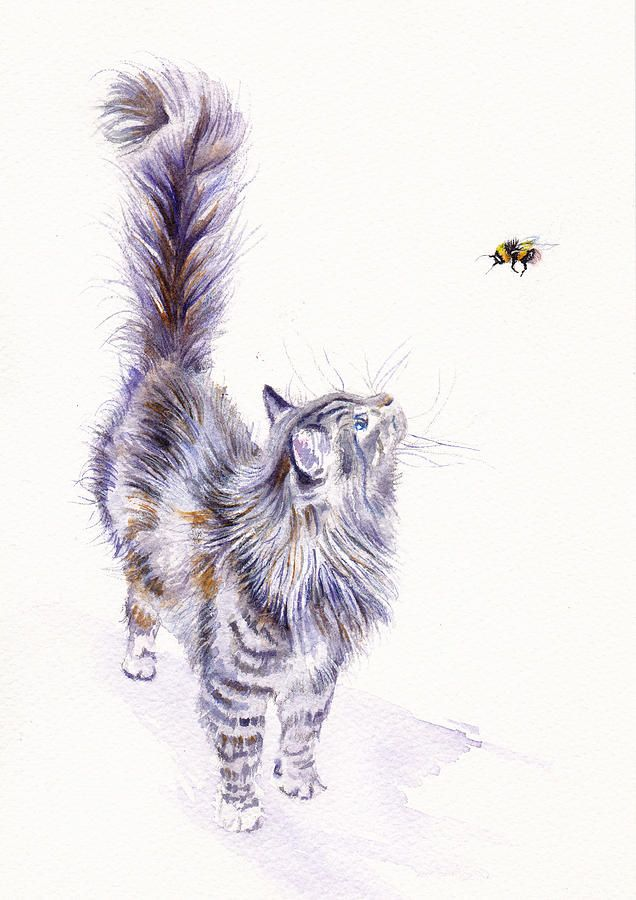 Bright Eyed And Bushy Tailed Grey Tabby Cats Long Haired Cats