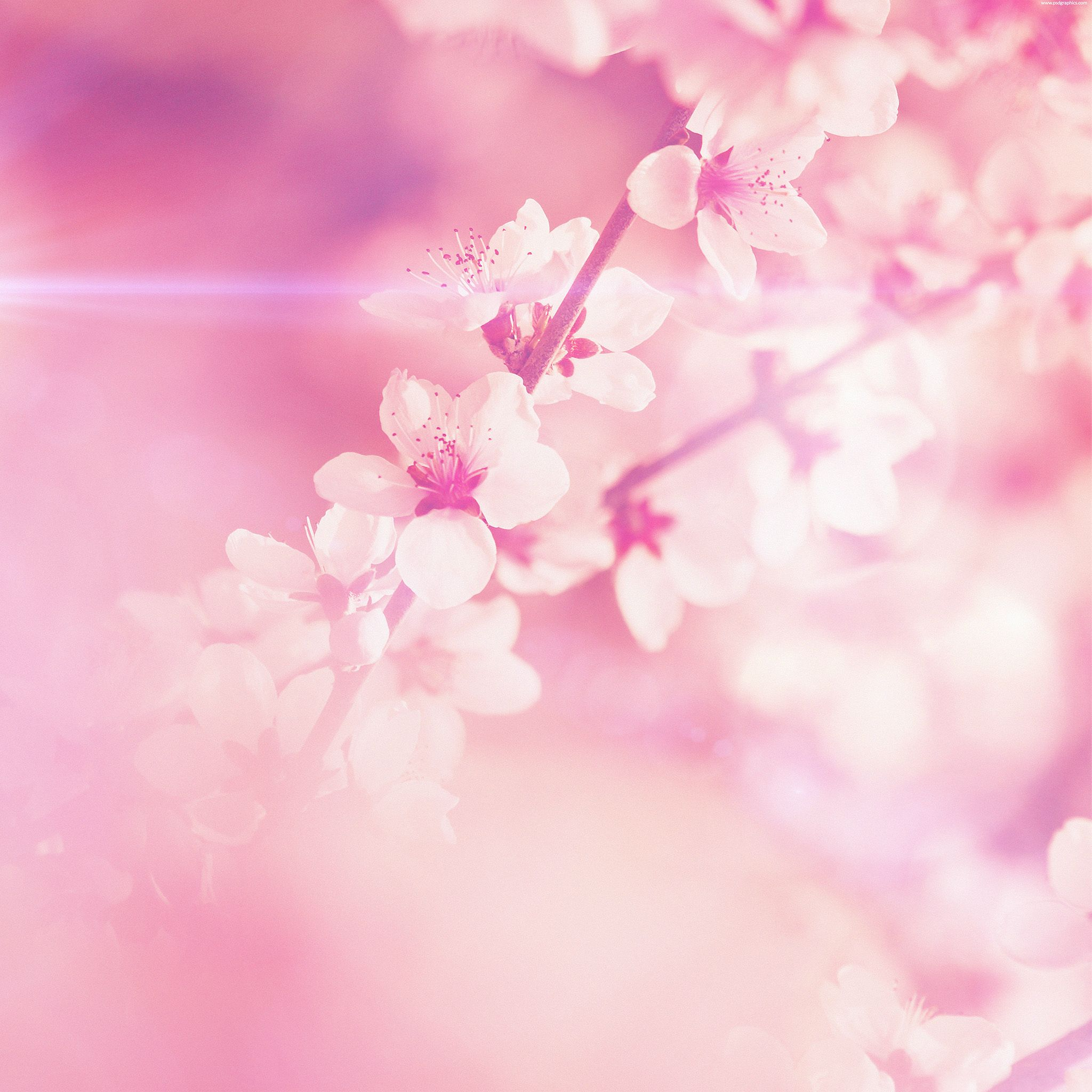 Spring pink cherry blossom flare nature ipad air wallpaper search results for ipad air wallpaper pink adorable wallpapers voltagebd Choice Image