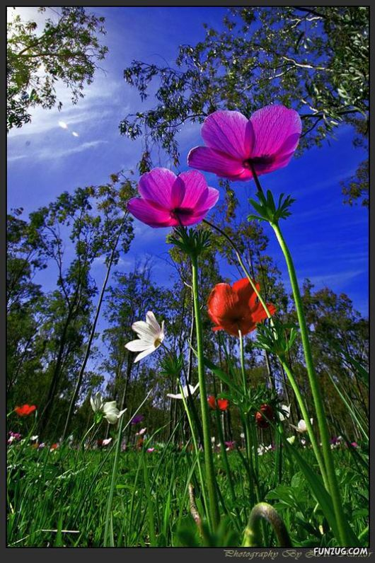 Funzug Com Colourful Bom Dia Flower Beautiful Flowers Pretty Landscapes Flower Beauty