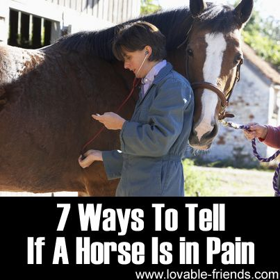 7 Ways To Tell If A Horse Is in Pain ►►  http://www.lovable-friends.com/7-ways-to-tell-if-a-horse-is-in-pain/?i=p
