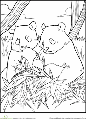 Giant Panda Coloring Page  Kindergarten Colors and Animal