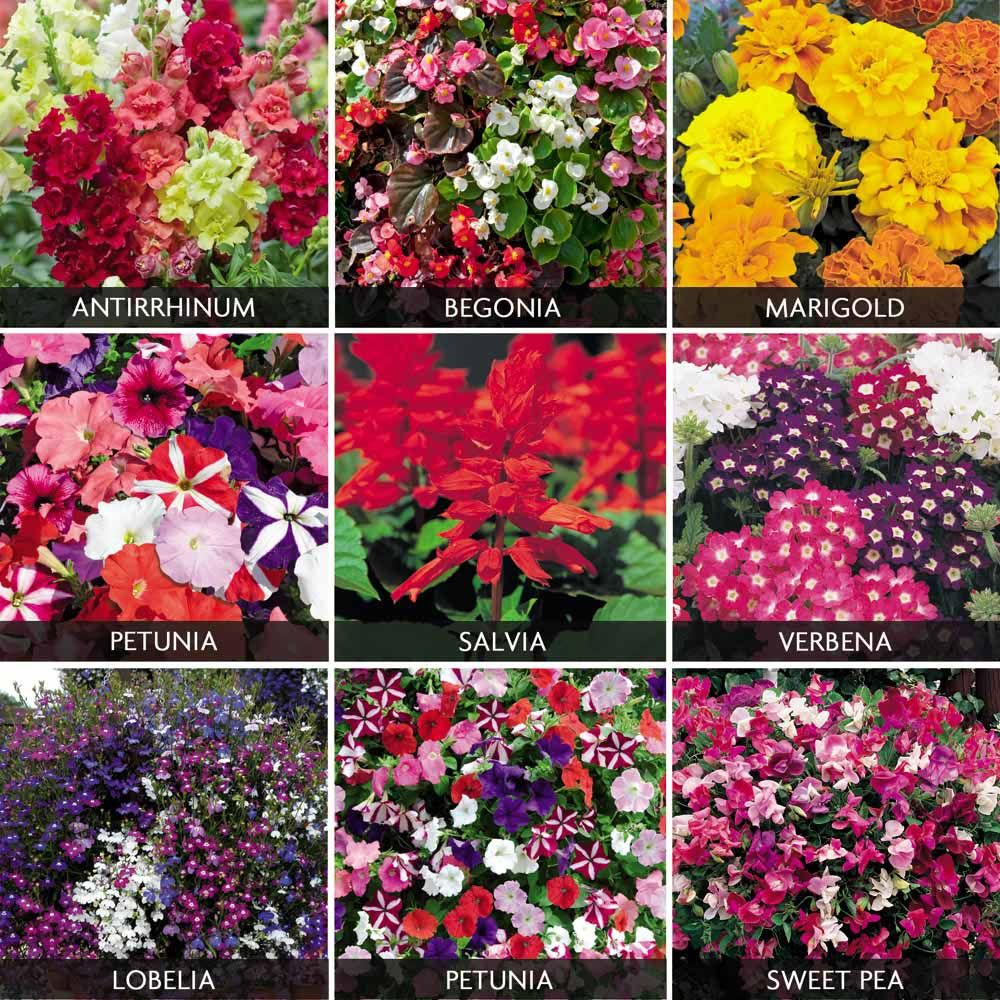 Summer Bedding Collection Yard Garden Pinterest Annual