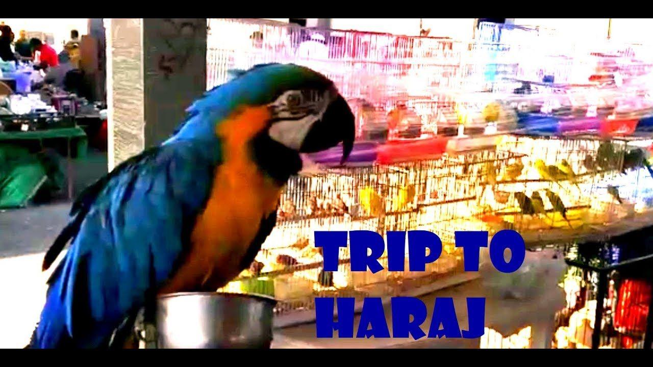 Ukay Ukay In Bahrain Trip To Haraj Ofw In Bahrain Trip Pets