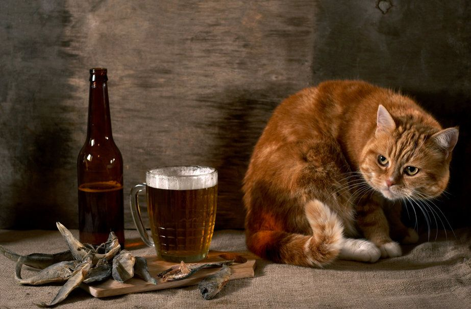 бутылка пива, стены вектор