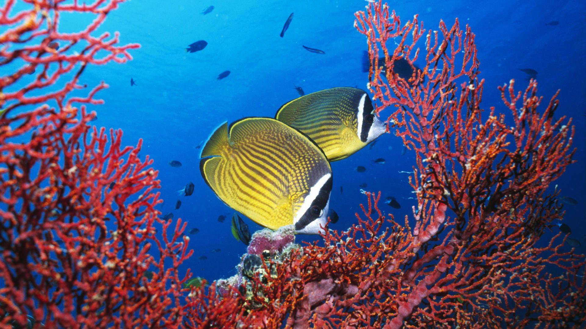 Les Photos Corail - Les 231 belles images de animaux