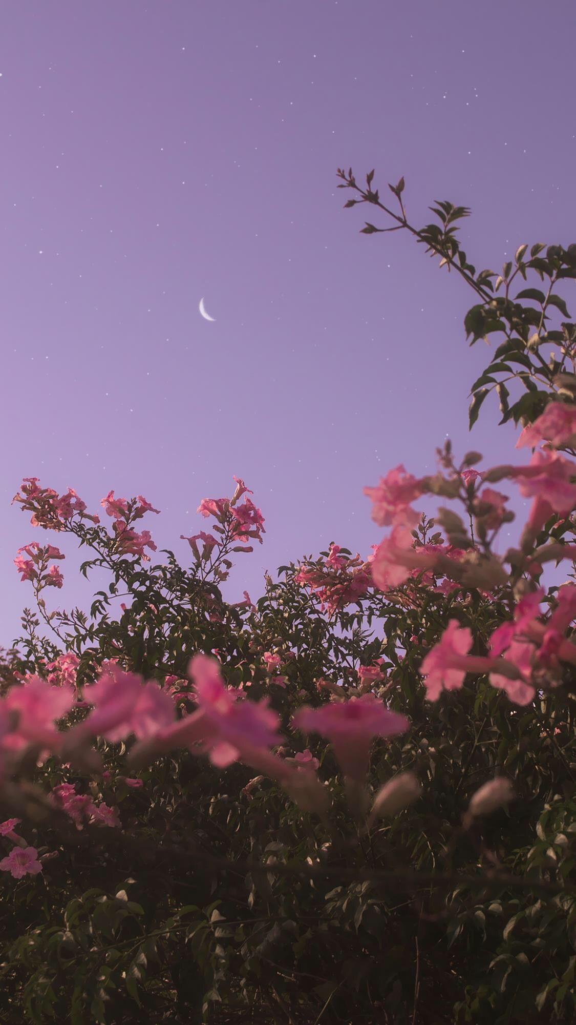 Flowerphotography Flowerwallpaper Evening Flowers Darken Begun Bloom Just Were Full The Sky And T Fotografi Alam Fotografi Abstrak Latar Belakang Coolest flower tree wallpaper images