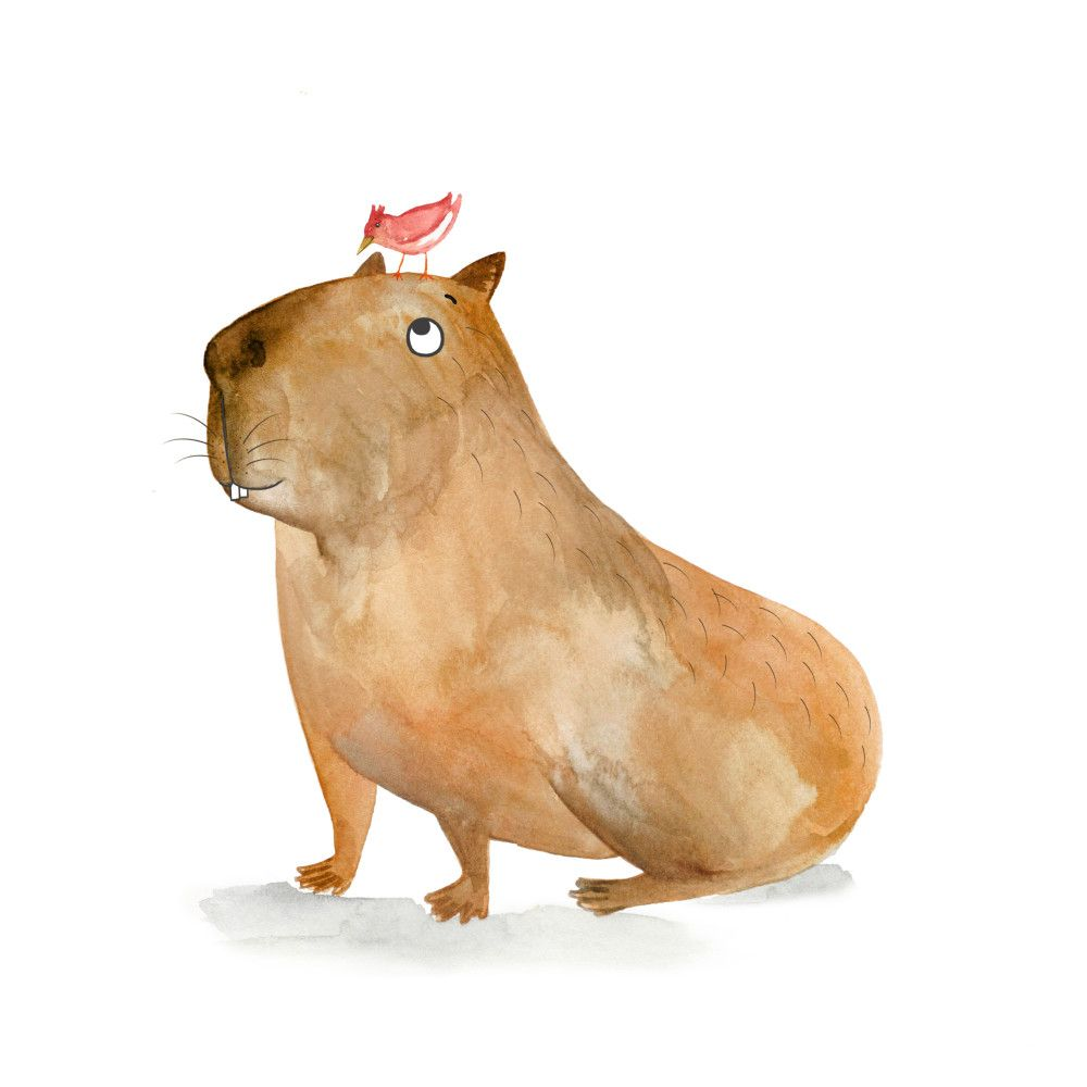 A Capybara...and his friend. | Desenhos | Pinterest | Imágenes del ...