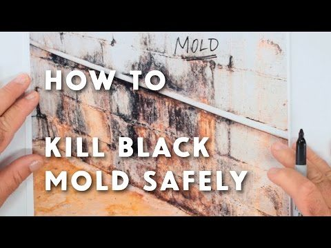 How To Get Rid Of Black Mold The Easy And Way Dengarden