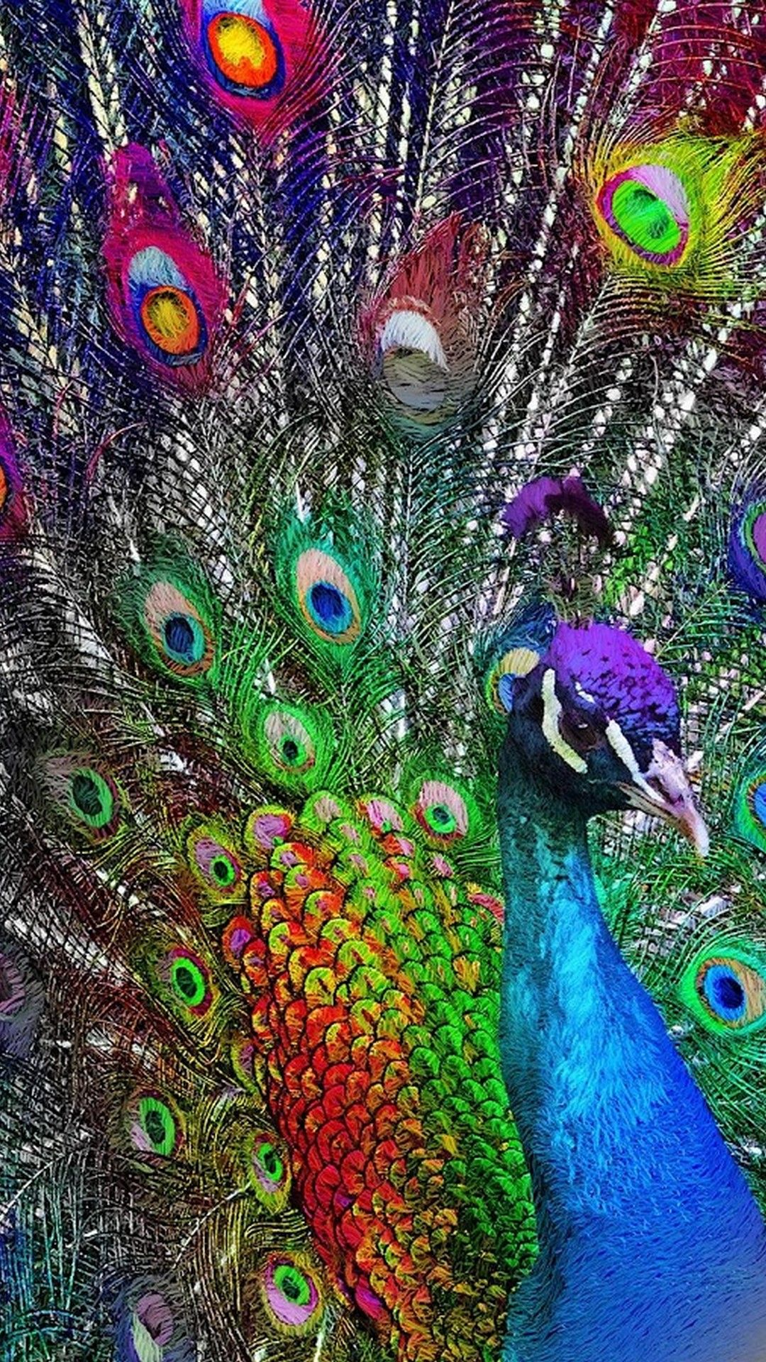Purple Peacock Wallpaper For Iphone Best Iphone Wallpaper Peacock Wallpaper Purple Wallpaper Iphone Purple Peacock