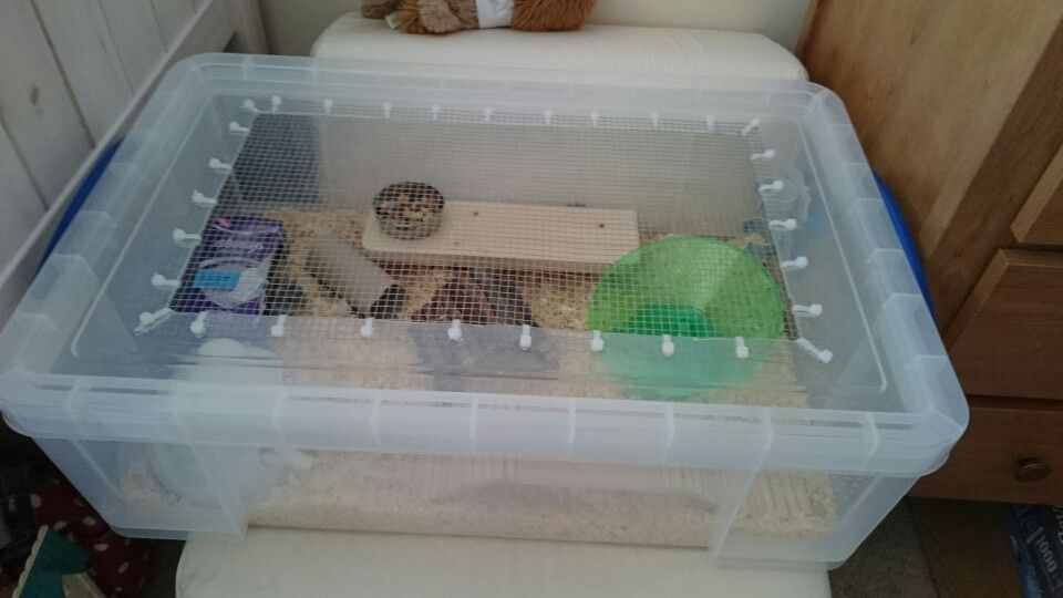 5b91199dbbc4d Handmade hamster cage for my winter white dwarf which I have made myself