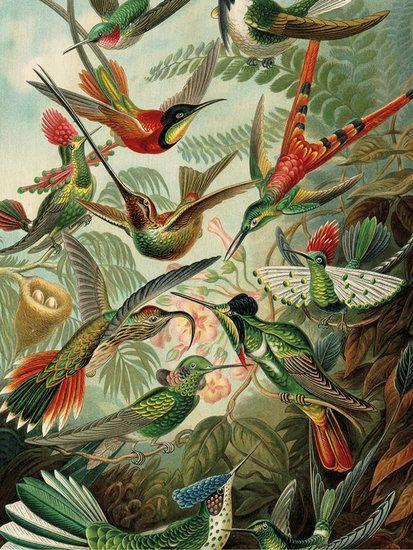 KEK-Amsterdam-print-op-hout-Exotic-Birds - Hoeked