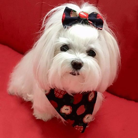 Pet Bandanna For Dogs Reversible Custom Made Made To Order Dog