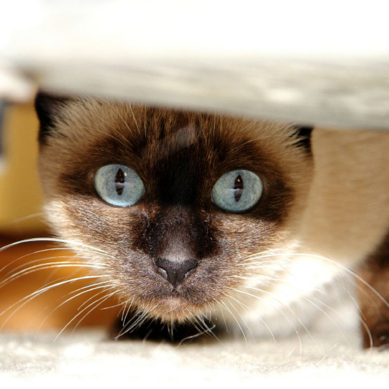 Control freak le personalità controllanti Cat anxiety