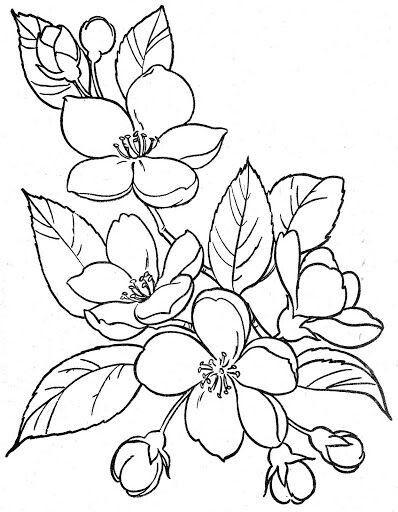Flores Dibujos De Flores Dibujos Para Bordar Y Dibujos