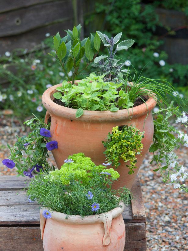 Fragrant Herb Container Combinations Patio Herb Garden Planting Herbs Herb Containers