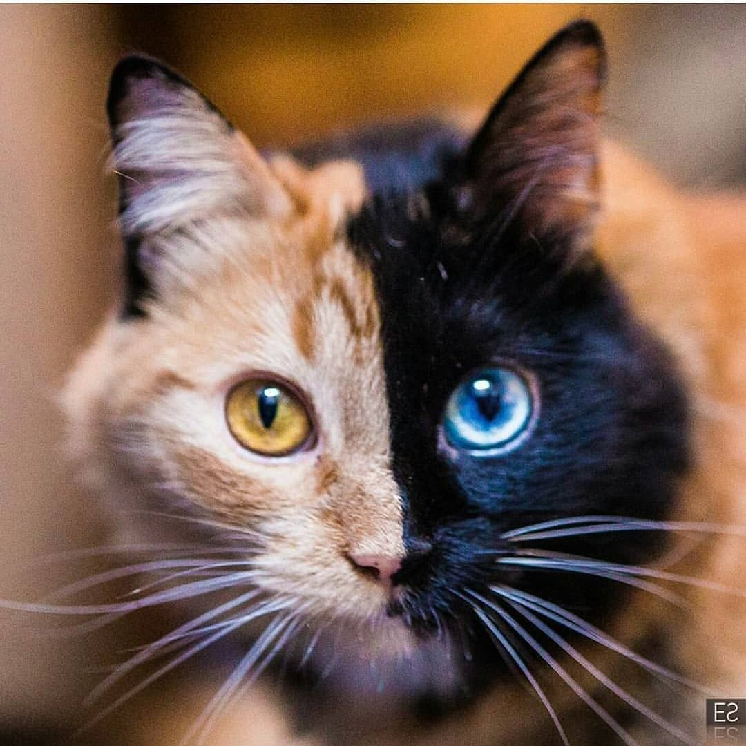 Pin by Jome on cats Animals beautiful, Rare animals