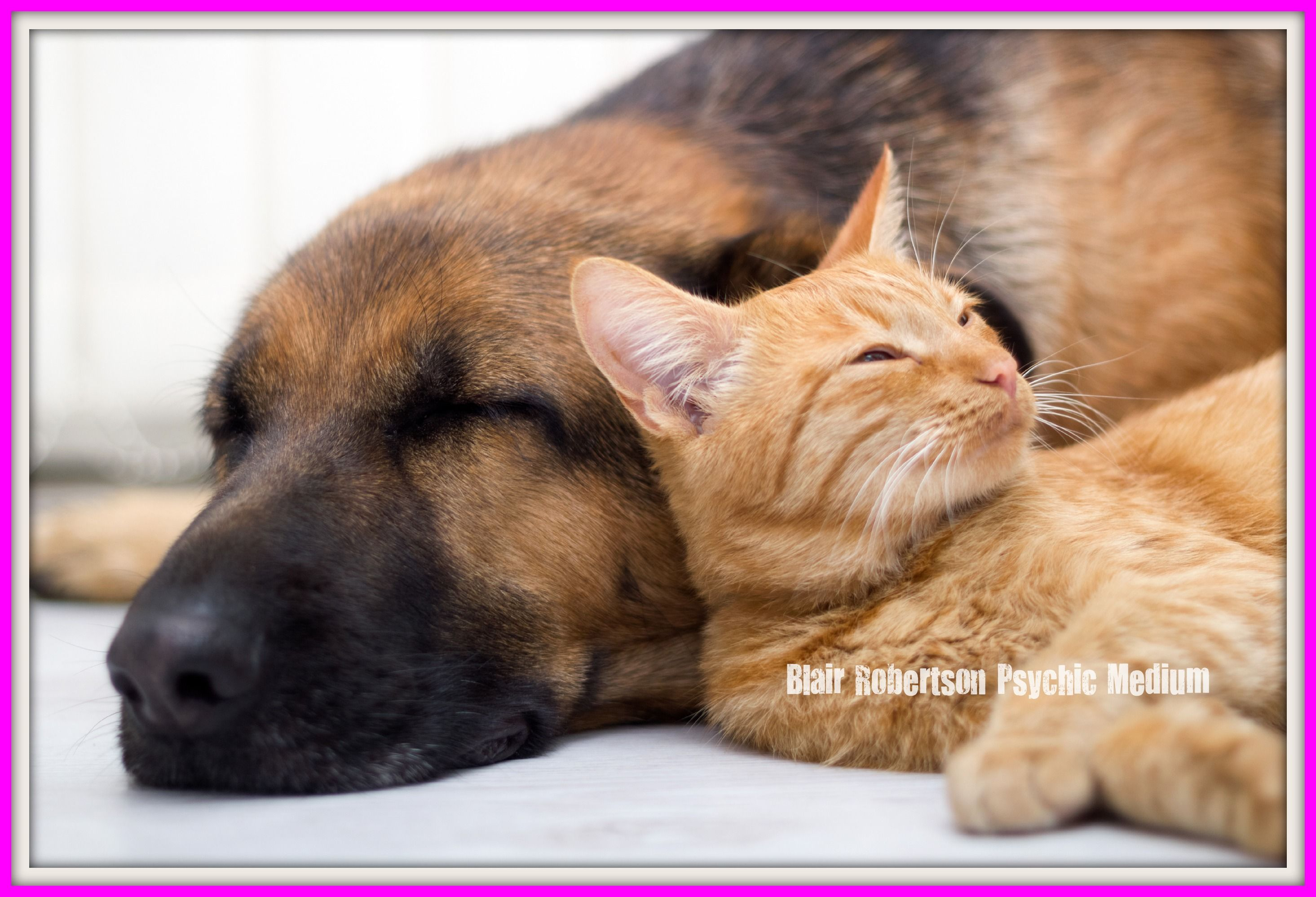 Do Pets Go To Heaven Dog Cat Pictures Sleeping Dogs Dog Pictures