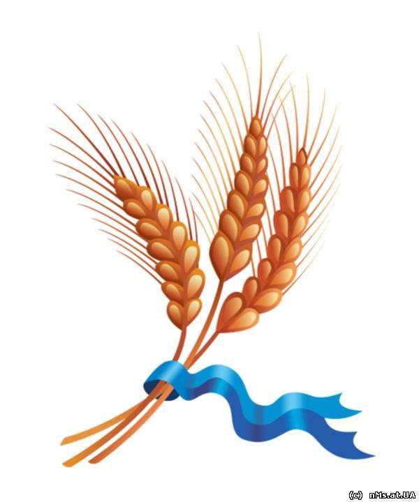 раскраска поле пшеницы   Первоцветы