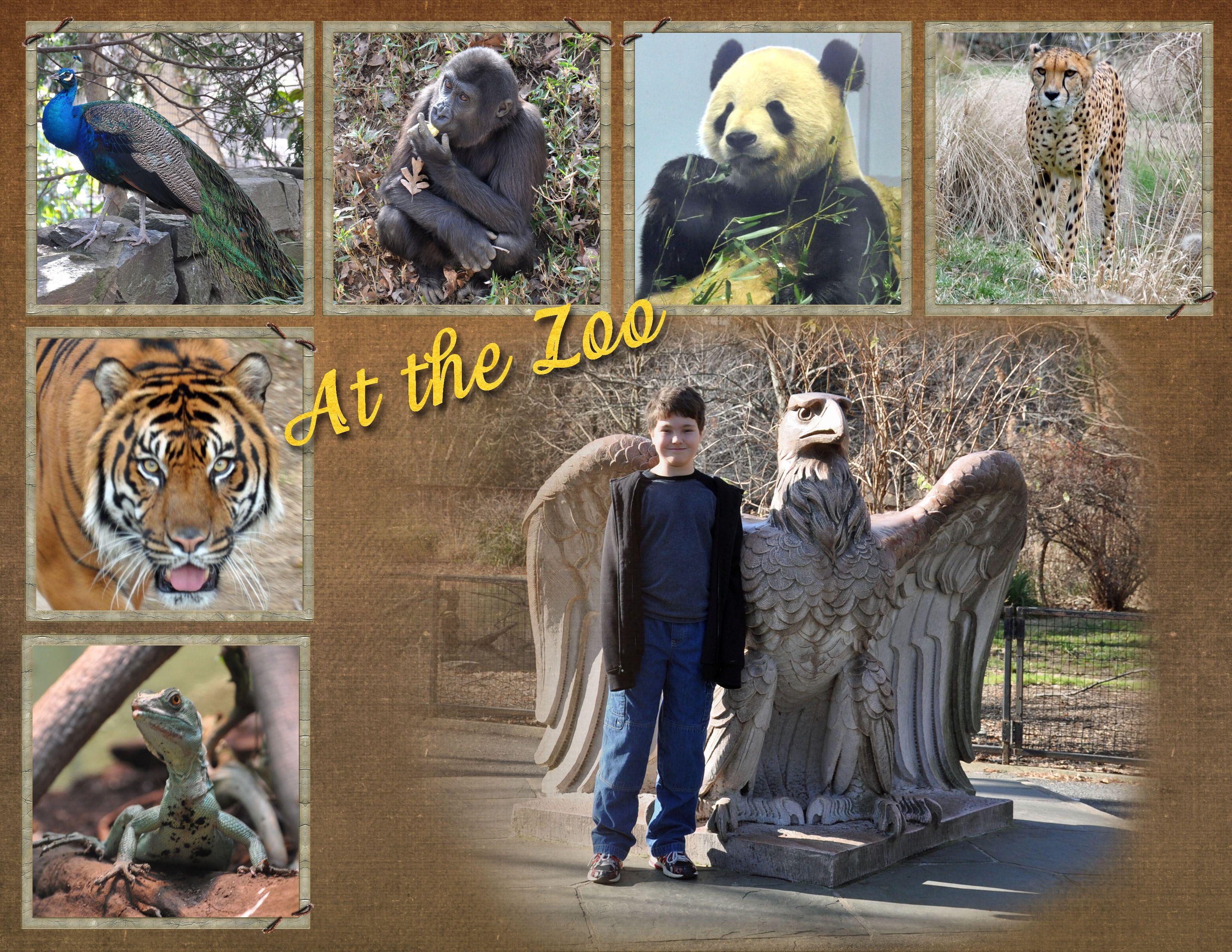 Scrapbook ideas zoo - Washington Dc Zoo Scrapbook Com