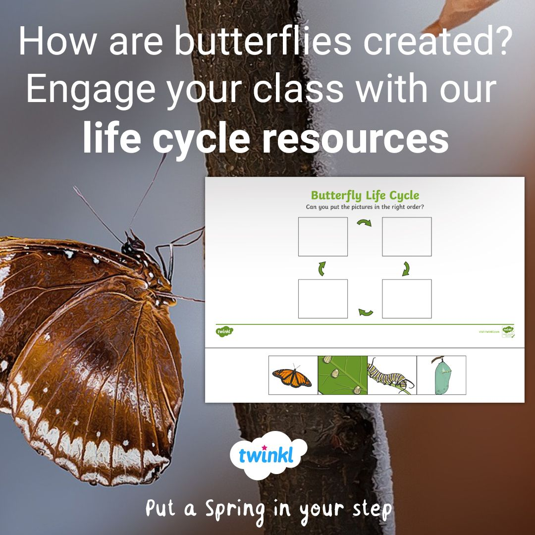Many Classes Have Started To Have Butterfly Hatching Kits