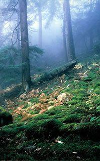 Cookforest