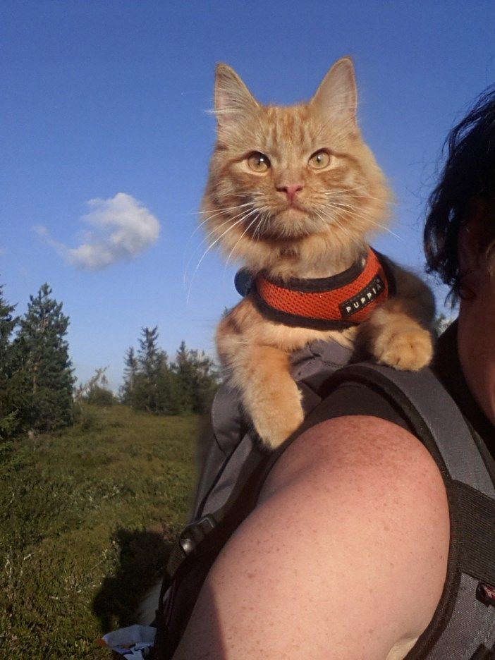 動物 主に猫 おしゃれまとめの人気アイデア Pinterest ゆう 猫 動物 飼い主