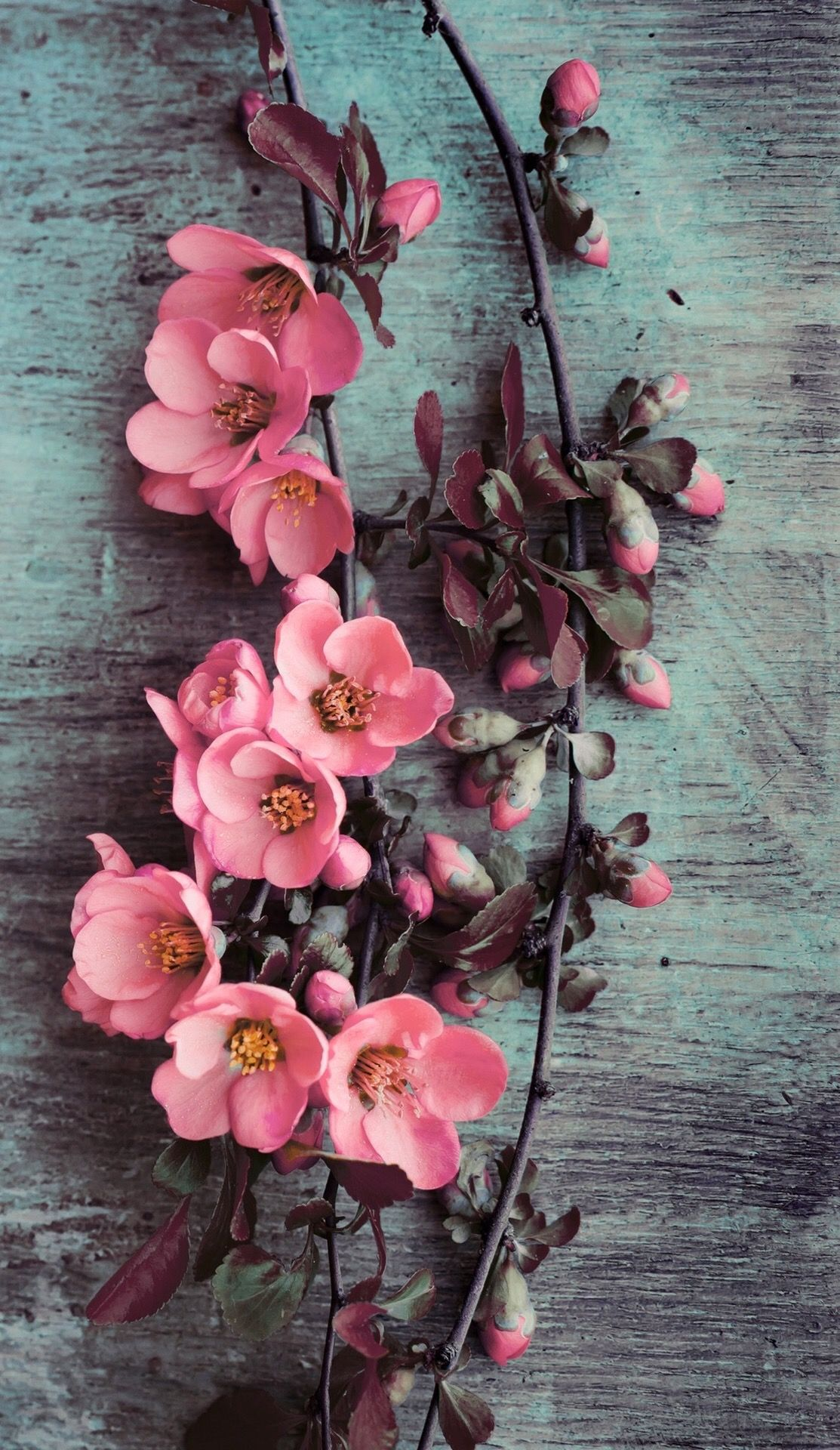 Wallpaper Iphone Beauty Pink Flowers  E2 9a Aa