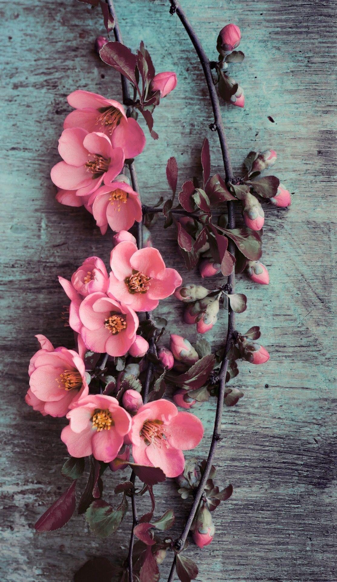 Wallpaper iPhonebeautypink flowers   l  Pinterest  Flowers