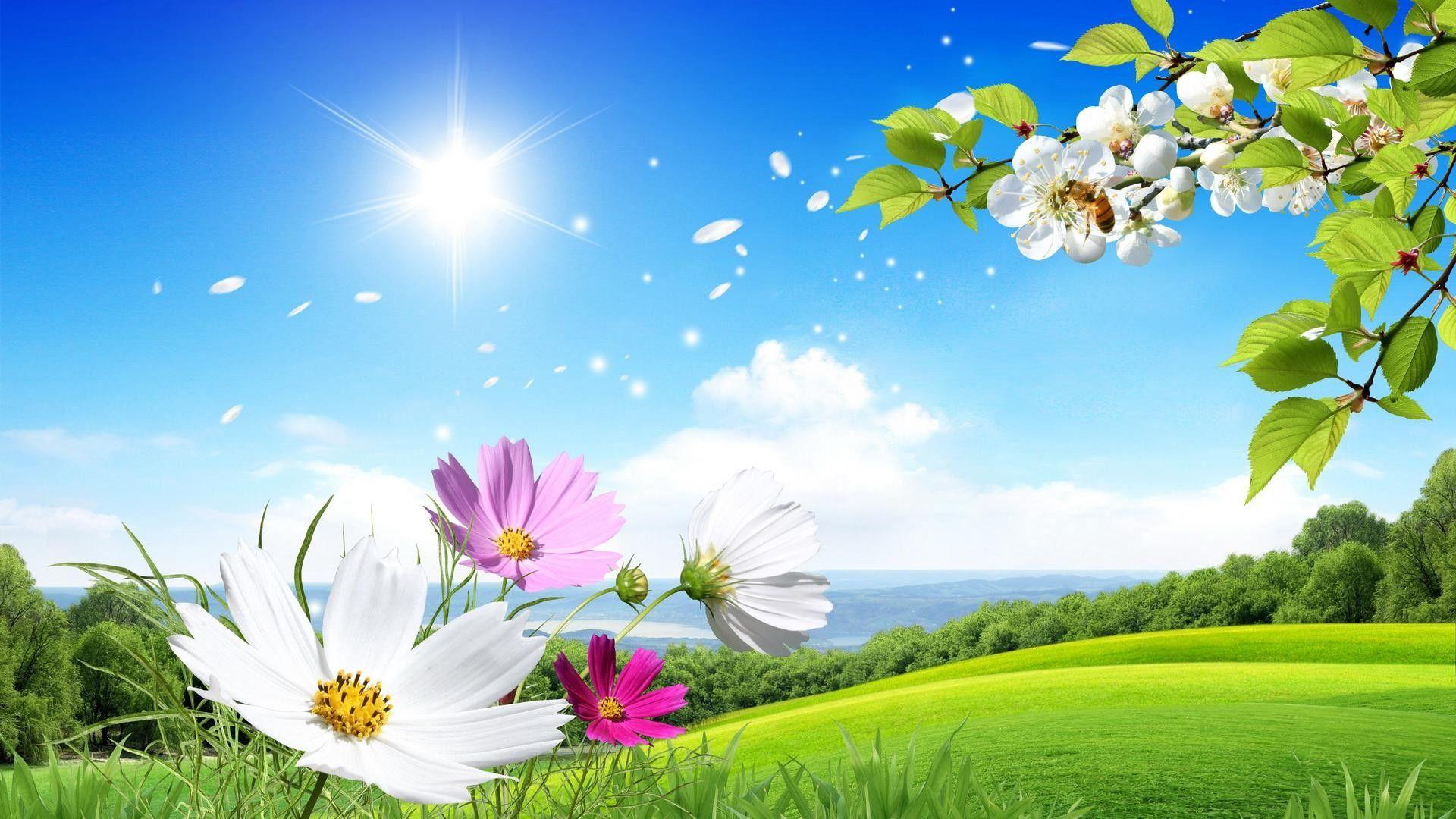 Good Morning Flowers Wallpapers Jpg 1920 1080 Beautiful Summer Wallpaper Scenery Wallpaper Beautiful Scenery Wallpaper